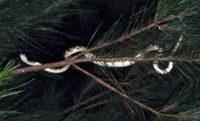 akmt-on-tree-110917.jpg