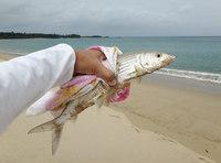 bonefish-150628.jpg