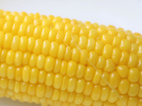 corn-190520.jpg