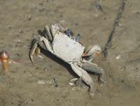 crab-190626.jpg