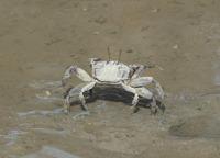 crab2-190626.jpg