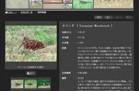 db-200407.jpg