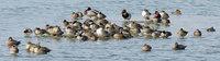 ducks-160228.jpg