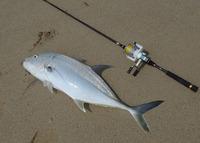 fish-170627.jpg