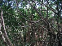 hh-jungle-130517.jpg