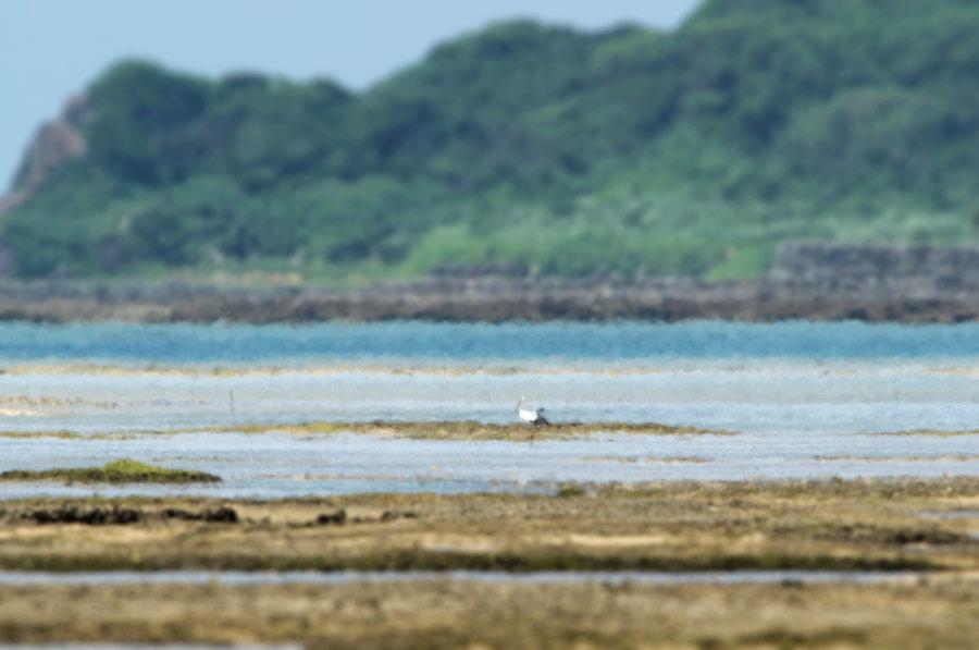 徳之島 自然日誌