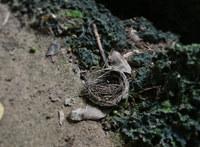 nest-140628.jpg