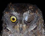 owl's-wink.jpg