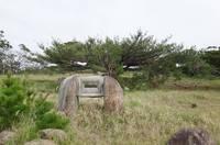pine-181205.jpg
