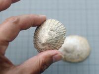 shell-180813.jpg