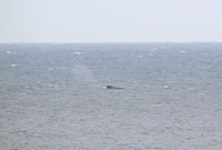 whale-190214.jpg