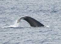 whale-190220.jpg