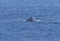 whale02-180216.jpg