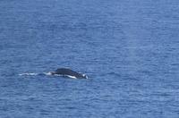 whale03-180216.jpg